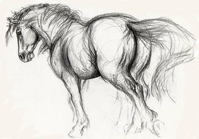 Welcome Friends, Family and Equine Art Enthusiasts: drawthehorse.com